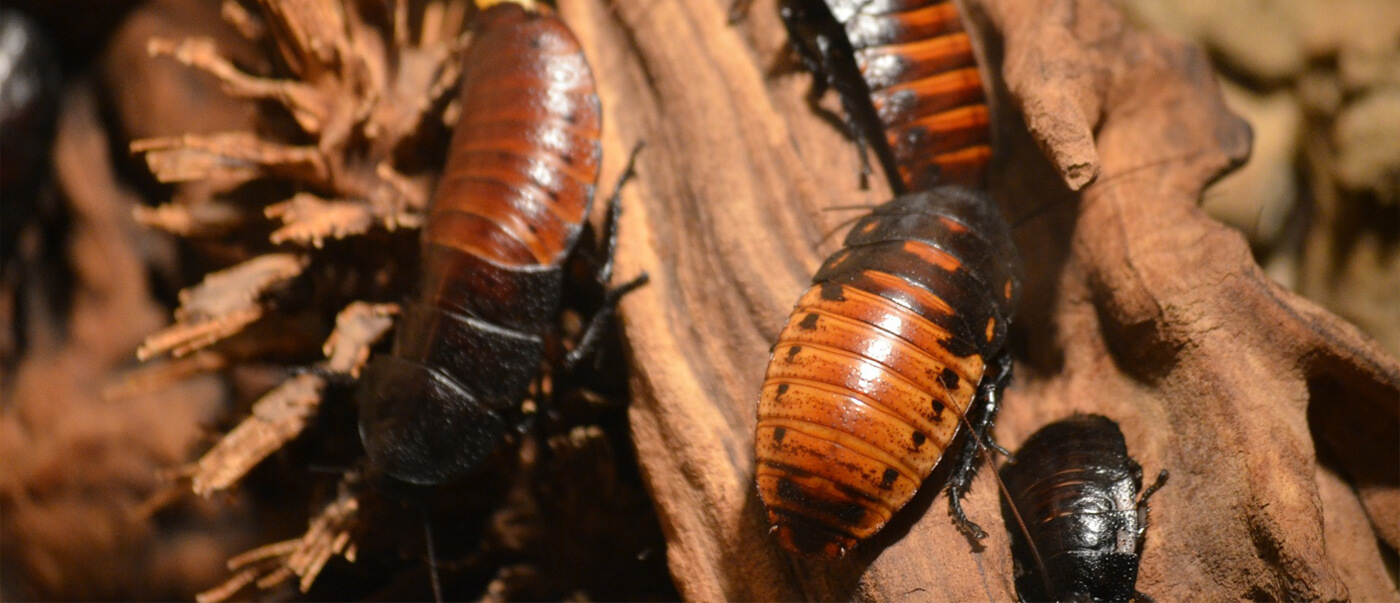 YOUR PROFESSIONAL PEST CONTROL COMPANY